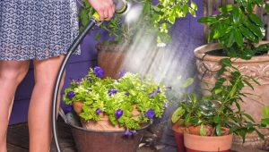 Helpful tips for Effective Water Gardening