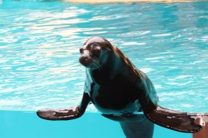 The Best Way to Enjoy Swimming with Seals at Bermagui and Montague Bay